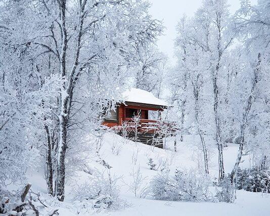 zima ogród