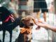 dbanie o psa
