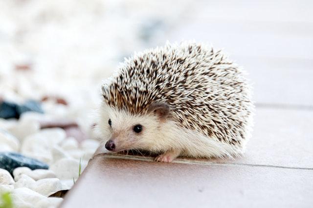 oryginalne zwierzęta domowe