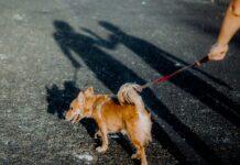 spacer z psem